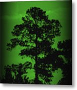 Evening Pine Metal Print