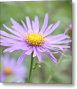 Everything Is Coming Up Daisies Metal Print