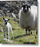 Ewe And Lamb No2 Metal Print