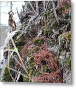 Exposed Roots I Metal Print