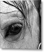 Eye Of  The Stallion Metal Print