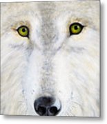 Eyes Of The Wolf Metal Print