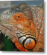 Face A Mother Can Love Metal Print