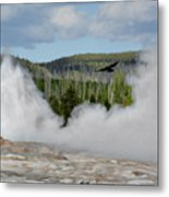 Falcon Over Old Faithful - Geyser Yellowstone National Park Wy Usa Metal Print