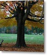 Fall At Maymont Metal Print