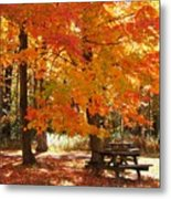 Fall At The Park Metal Print