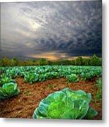 Fall Cabbage Metal Print