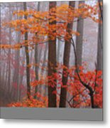 Fall Fog. Metal Print