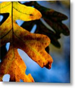 Fall Foliage Leaf Near Ruidoso Nm Metal Print