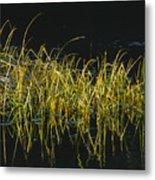 Fall Grasses - Snake River Metal Print