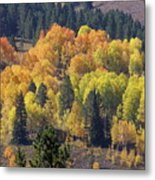 Fall Lands In Western Wyoming Metal Print