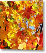 Fall Leaves Background Metal Print by Carlos Caetano