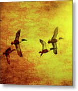 Fall Migration . Northern Shovelers . Texture . 40d5393 Metal Print
