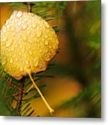 Fall Raindrops Metal Print