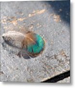 Fallen Peacock Feather Metal Print