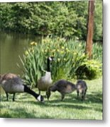 Family Outing Of Geese Metal Print