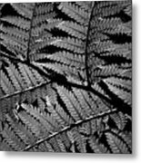 Fan Of Fronds Metal Print