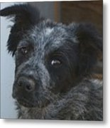 Farm Puppy  Metal Print