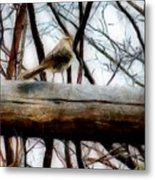 Fat Sparrow Fat Fence Metal Print