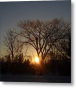 February Sunrise Behind Elm Tree Metal Print