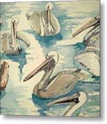 Feeding Pelicans Metal Print