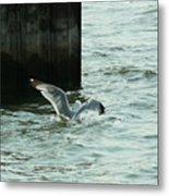 Feeding Time In Ephraim Wi Metal Print