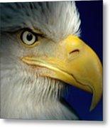 Female Bald Eagle Alaska Metal Print