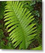 Fern Leaf In June Metal Print