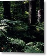 Ferns In The Forest Wc Metal Print
