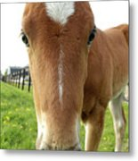 Filly Face Metal Print