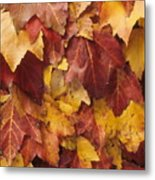 Final Fall In File Metal Print