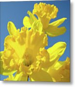 Fine Art Daffodils Floral Spring Flowers Art Prints Canvas Baslee Troutman Metal Print
