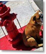 Fireplug Bulldog Metal Print
