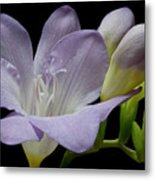 First Bloom Metal Print