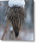 First Snow On The Thistle Metal Print