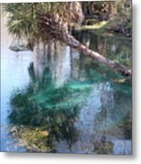 Fish Haven Metal Print