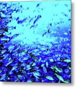 Fish Traffic Metal Print