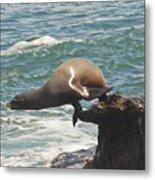 Fishing Sea Lion Metal Print