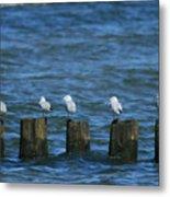 Five Birds Metal Print