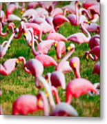 Flamingo 6 Metal Print