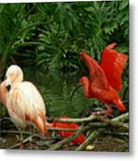 Flamingo And Scarlet Ibis Metal Print