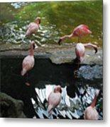 Flamingoes At The Zoo Metal Print