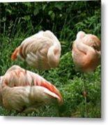 Flamingo's At Rest Metal Print