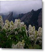 Flatirons White Lilacs Metal Print