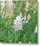 Flight Of The Bumblebee Metal Print
