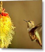 Flight Of The Hummer Metal Print