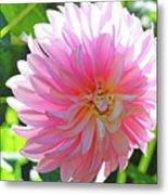 Floral Art Prints Pink Dahlias Sunlit Baslee Troutman Metal Print