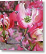 Floral Dogwood Tree Flowers Baslee Troutman Metal Print
