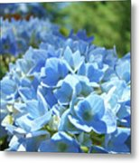 Floral Fine Art Blue Hydrangeas Baslee Troutman Metal Print