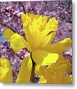 Floral Fine Art Daffodils Art Prints Spring Flowers Sunlit Baslee Troutman Metal Print